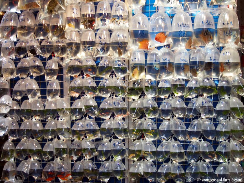 Fish bags in Hong Kong