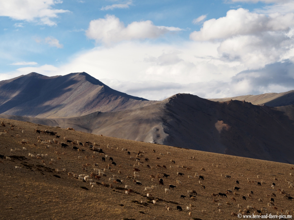 Nomads near Sangtha, in Ladakh